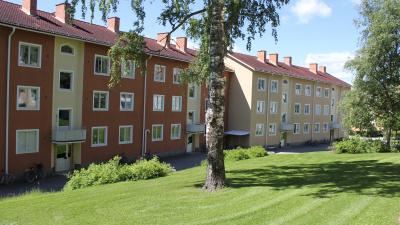 Bild som visar två stora trevåningshus. Ett med roströd och ett med lejongul puts. En gammal björkstam i förgrunden.