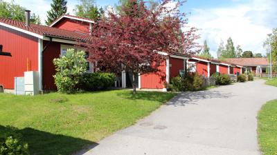 Innergård på bostadsområde med asfalterad väg och hyreshus och blommande träd